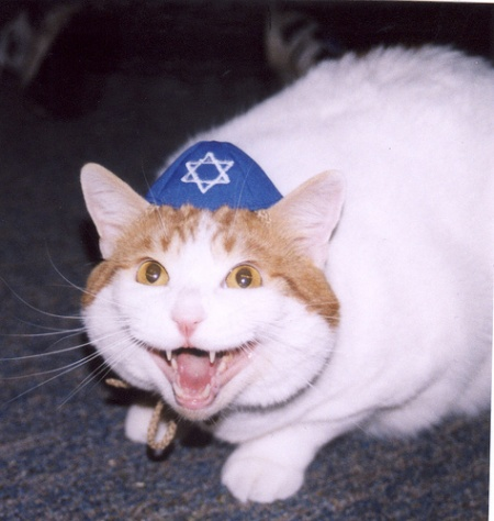 [Image: cat-yarmulke.jpg]