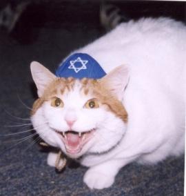 cat-yarmulke