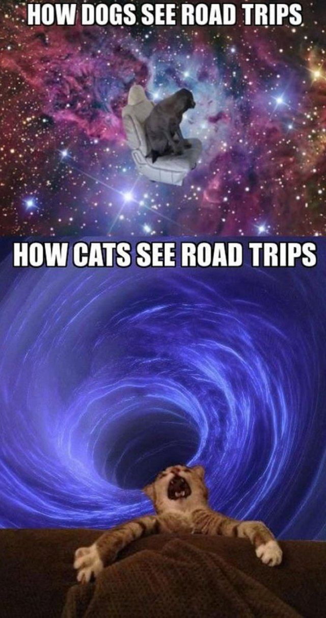 2f224546848b0a2934747efd20c42e3d-how-dogs-see-road-trips-vs-how-cats-see-road-trips